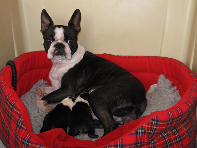 Roosa and her puppies 2 days old