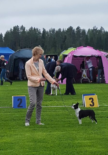 Zimyrs Little Elmira BOB in Kokkola int show